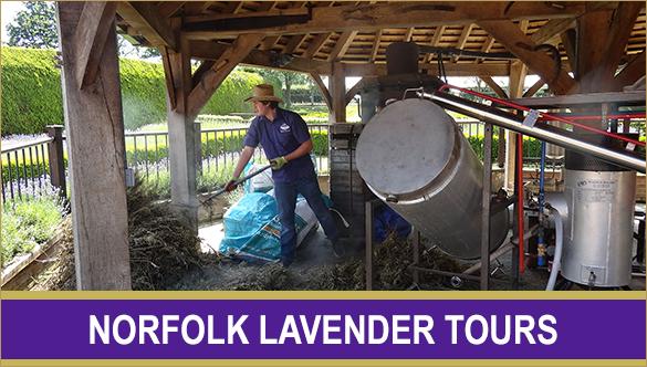 lavender_tours_collection_button