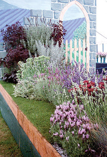 lavenders_for_your_garden_2